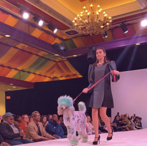 Photo of Hailey walking on the runway with a colored poodle